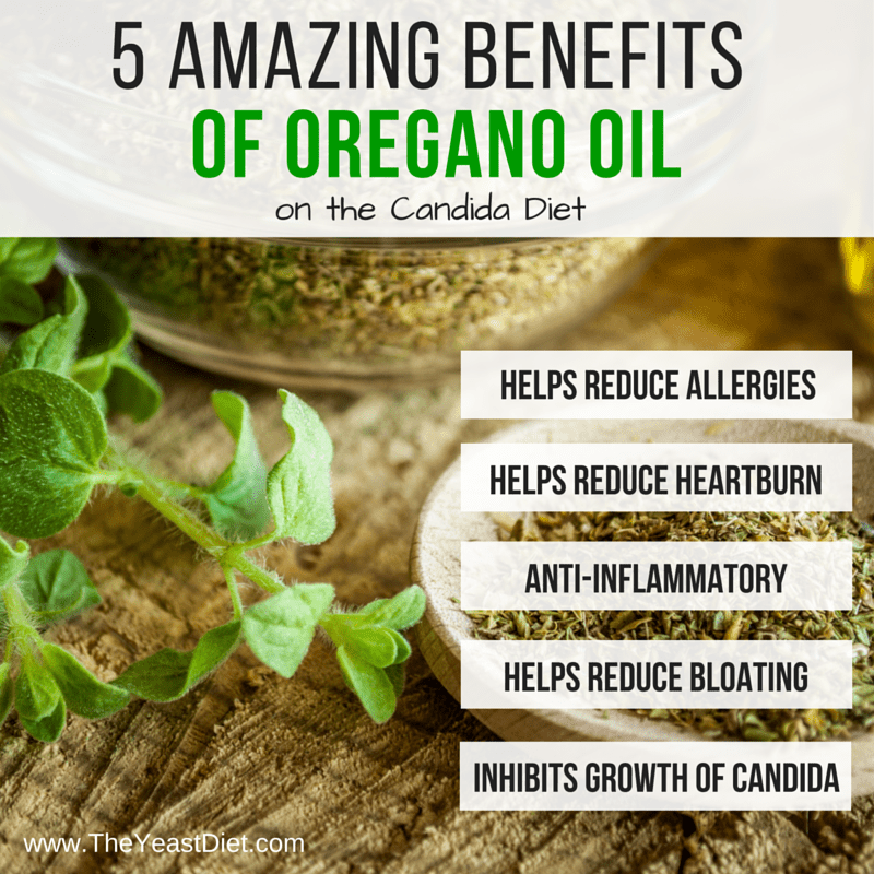 Oregano Benefits on the Candida Diet